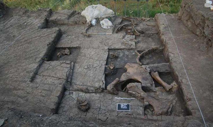 Antrophistoria: Encuentran los restos de un elefante prehistórico masacrado en Grecia
