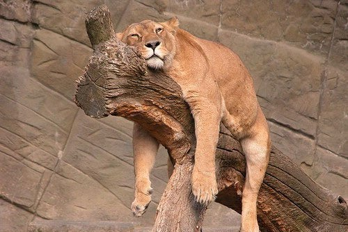 RelaxBig Cat, Lazy Day, Sleep Animal, Cat Naps, Naps Time, Funny Animal, Content Marketing, Rough Day, The Zoos