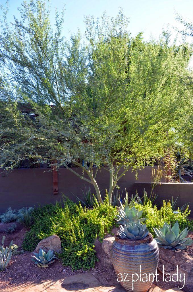 Looking for Inspiration: Low-Maintenance Desert Landscapes