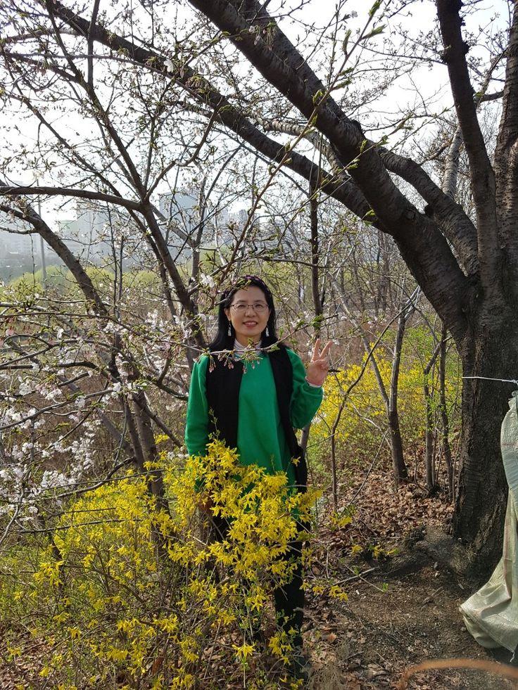 2017 여의도 벚꽃 윤중로 , #서울 #여의도, cherry blossom viewing ,  #cherryblossom  , #KBS강성실 , #Seoul , #Korea , #대한민국 , #한국