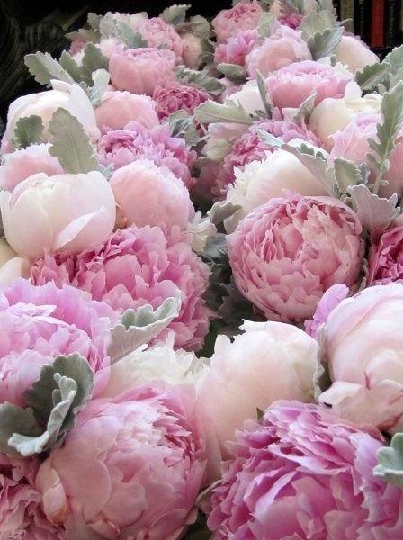 Pink peonies//