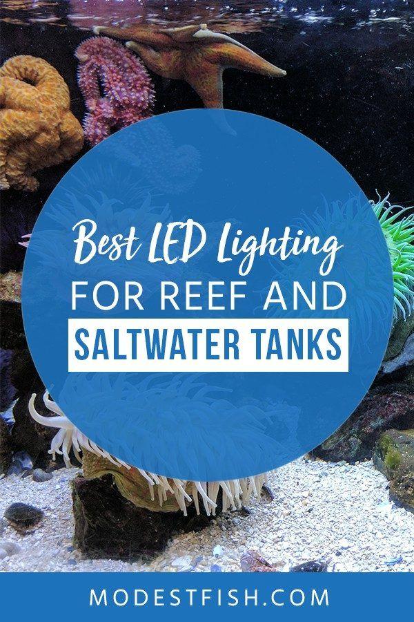 Best Led Lights For Reef Tanks In 2019 Reviewed Reef Tank Saltwater Tank Saltwater