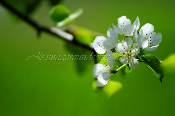 3613 green spring apple  background