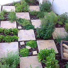Checkerboard herb garden garden ideas pinterest for Checkerboard garden designs