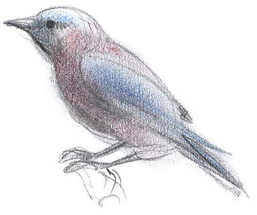 Contour Line Drawing Bird : Best images about line art on pinterest woman face