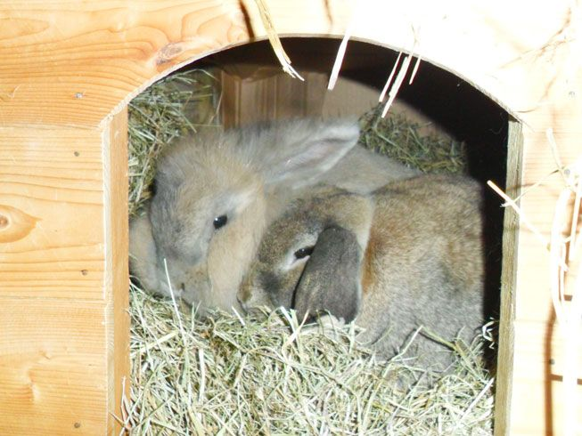 How To Keep Your Rabbit Warm Amp Healthy In Winter Just To