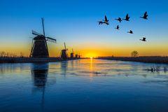 Kinderdijk - gansos voando sobre o nascer do sol sobre a moinhos de vento alinhamento congelada Stock Photo