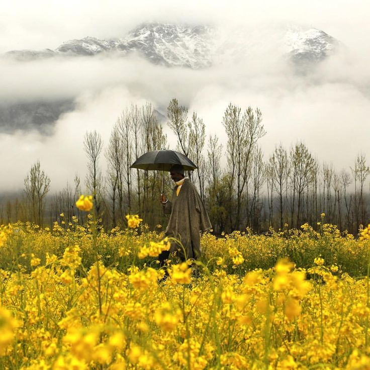 A Kashmiri man walks through a mustard field during a rainy day on the outskirts of Srinagar, Kashmir on March 17, 2016.  Photograph by Mukhtar Khan—@ap.images