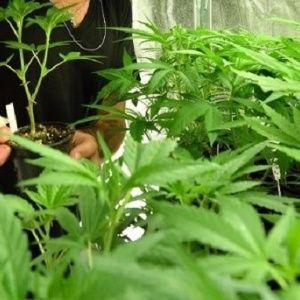 Peru's President Signs Bill Legalizing Medical Marijuana  ||  <p>Peru joins the ranks of several other Latin American countries moving towards the legalization ofmarijuana for medicinal purposes.</p> https://www.telesurtv.net/english/news/Perus-President-Signs-Bill-Legalizing-Medical-Marijuana-20171117-0023.html?utm_campaign=crowdfire&utm_content=crowdfire&utm_medium=social&utm_source=pinterest