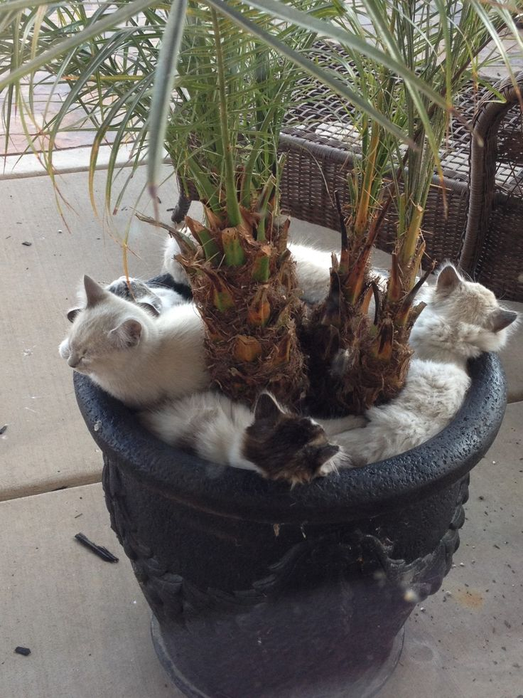 20 Cats Falling Asleep in Strange Places   PawPost