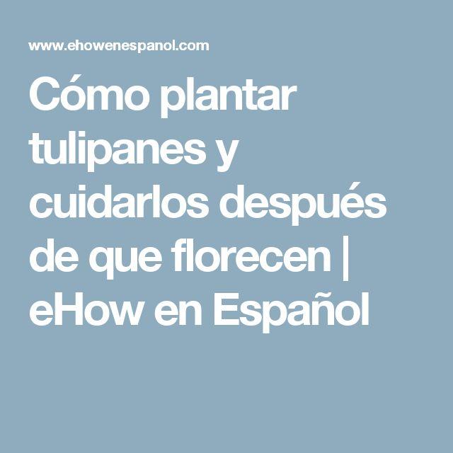 Cómo plantar tulipanes y cuidarlos después de que florecen | eHow en Español