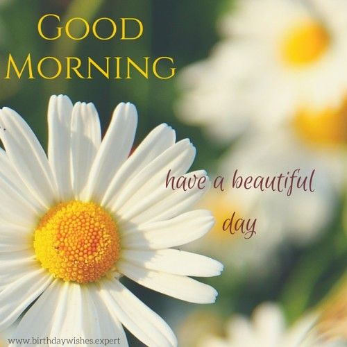 Good Morning Flowers Quotes : Good morning quotes with beautiful flowers images