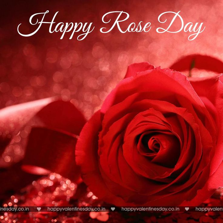 Rose Day - free ecards online - http://www.happyvalentinesday.co.in/rose-day-free-ecards-online-2/  #BestValentinesCards, #CardValentinesDay, #EcardsForValentinesDay, #FreeChristmasCards, #FreeHappyValentinesDayEcards, #FreeValentinesDayCards, #GreetingsValentinesDay, #HappyValentineDayRose, #HappyValentineDays, #HappyValentinesDayBaby, #HappyValentinesDayToEveryone, #HappyValentinesDayTranslation, #LoveValentineImages, #MothersDayCards, #OnlineValentineCards, #PhotosHappyVa