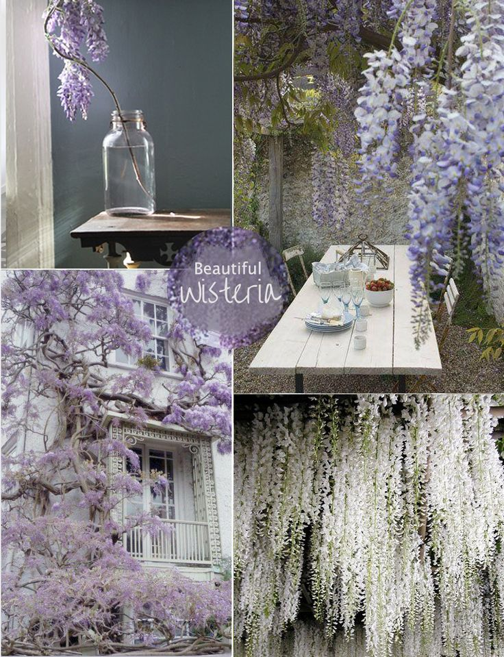 Beautiful Wisteria - mood board by The Olive Tree.