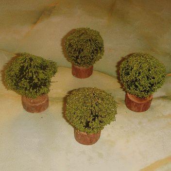 Petits arbustes .