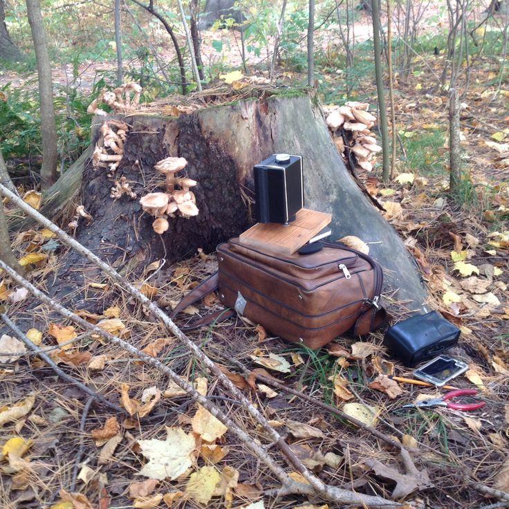 Installation précaire. Photo ratée. L'appareil a bougé durant la très longue exposition. Malgré tout, un bon moment zen passé en forêt.