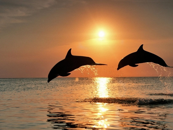 Dolphines at Sunset  :  ))