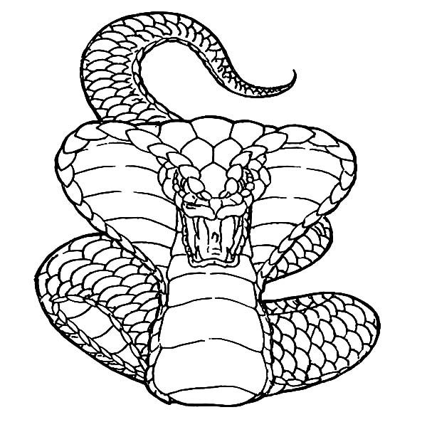 Cobra Snake Drawing Drawn Cobra Coloring Page Pencil And In