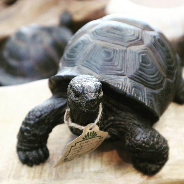 人気のペット貯金箱が売場に登場カメ 結構リアルオブジェとして存在感あり 他にウサギとカワウソもありますよあまりにカワイイお金を貯めても壊せないですね 貯金箱 ペットバンク ウサギ カメ カワウソ Pin 松阪フローラ インテリア 雑貨 Turtle Animals Instagram