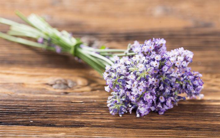 Download wallpapers lavender, purple flowers, bouquet, wild flowers