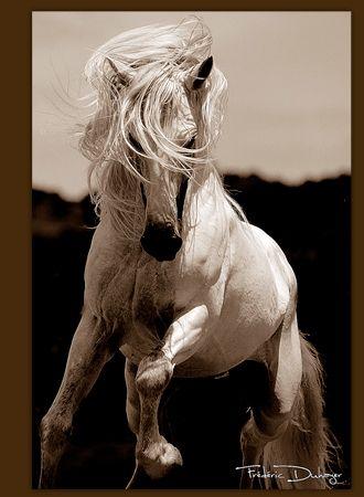cheval andalou | Les Races Partie 1:Le Pure Race Espagnole . - Articles