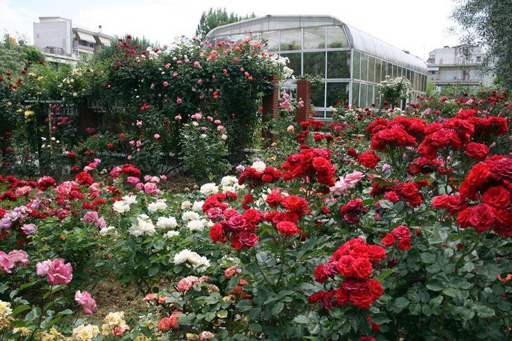 Μια όαση με 150 ποικιλίες τριαντάφυλλων, σπάνιες ποικιλίες λουλουδιών και βοτάνων, πληθώρα αρωματικών και φαρμακευτικών φυτών, φοίνικες, τεχνητές λίμνες και καταρράκτες.