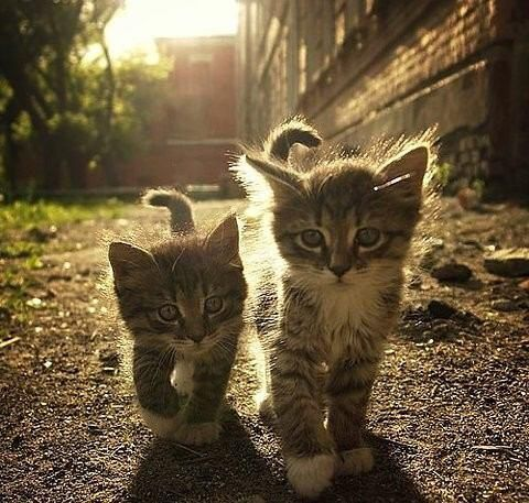Fluffy kittens in a streak of sunlight https://www.meowmoe.com/26783/