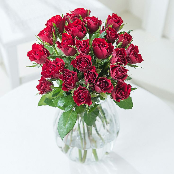 Pure Romance 24 Red Roses