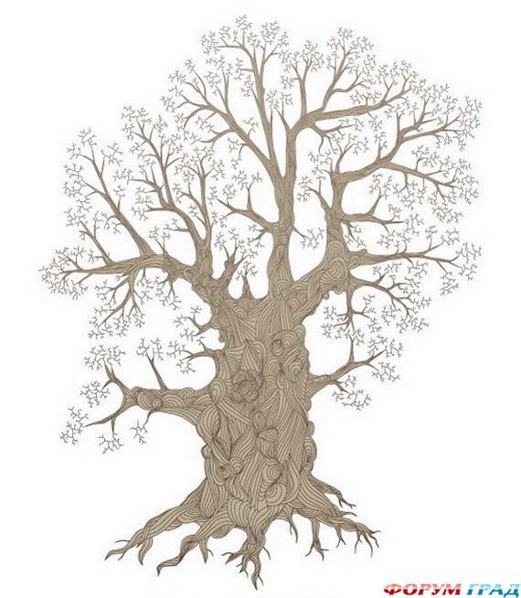 11 Best Family Tree Images On Pinterest Family Trees Family Tree