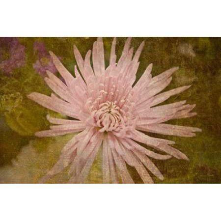 Heirloom Pink Canvas Art - Ramona Murdock (12 x 18)