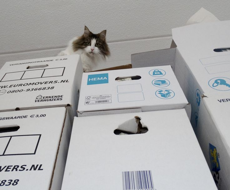 all removal boxes must be inspected #norwegianforestcat #noorseboskat #sweetvirginia