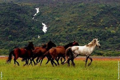 O cavalo lavradeiro de Roraima, também chamado de cavalo selvagem, é um dos principais símbolos do estado de Roraima e, por isso, normalmen...