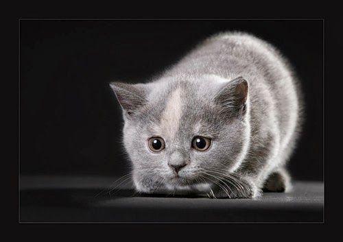 Sevimli kedicik resimleri,mini yavru kedi resimleri,flatcast tema ve tasarımlar için mini pisicik kedi resimleri,forumgazel den kedi resimleri