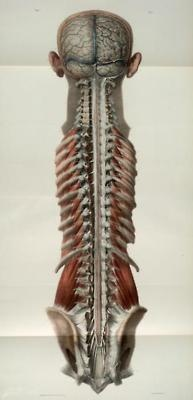 48 best images about spine on stretches