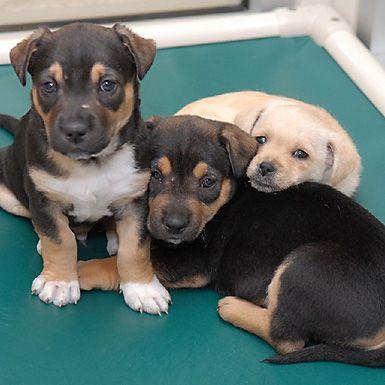 Symbolic Puppy Socialization Class