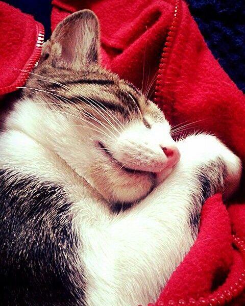 Bella asleep♥