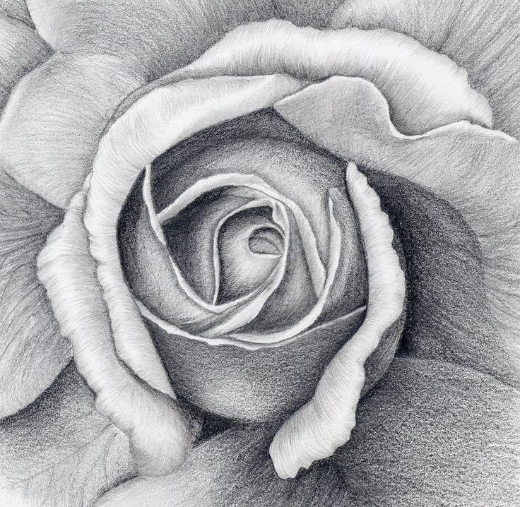 Картинки для рисования карандашом розу