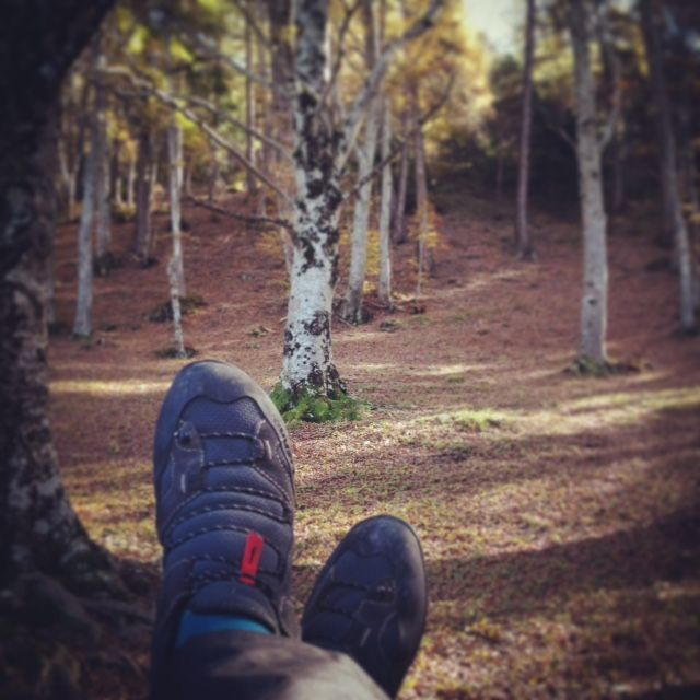 #Lizard in the woods. We love walking! #Lizardfootwear. www.lizardfootwear.com Follow us on Instagram.com/lizardfootwear