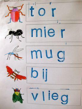 Yurls pagina insecten