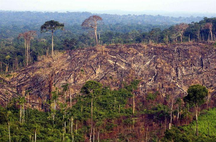 WWF: Lihantuotanto uhkaa Amazonin suojelualueita