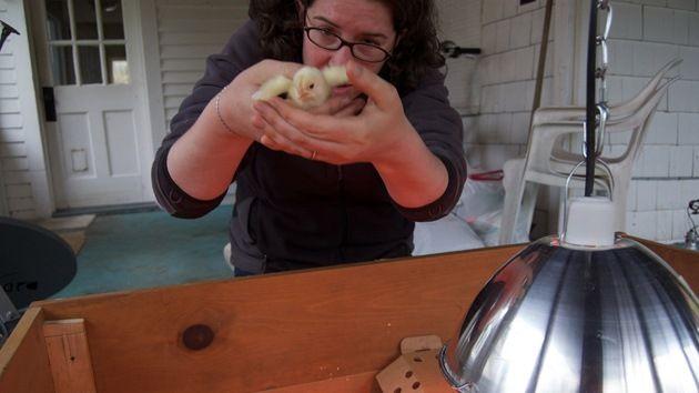 Sexador de pollos) Esta trabajo es muy utilizado en muchas granjas avícolas. Las oligaciones de esta trabojo son la identificación de sexo de los pollos cuando ellos tienen la edad de 1 día y dependiendo del resultado, se les asigna un suministro de alimentos específico.