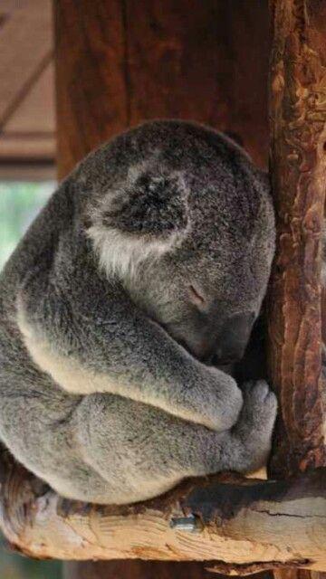Ahhh so cute and fluffy
