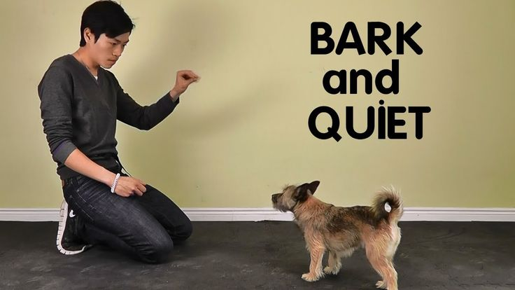 how to teach a dog to stop barking on command