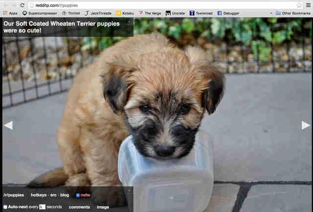 Reddit image slideshow of puppies