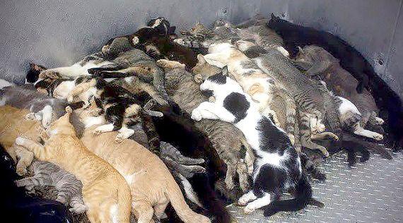 Alors qu'une convention est en place depuis 2 ans avec la SPA locale pour que les chats soient trappés pour y être identifiés et stérilisés,  le nouveau directeur des services techniques de la Ville de Chartres , à peine nommé,  recommencent des rafles de chats en vue de les euthanasier .    Le code rural et les termes de la convention de stérilisation à Chartres ne sont pas respectés  : En vertu de l'article L211-27 du code rural, le maire peut, par arrêté, à son initiative ou à la demande…