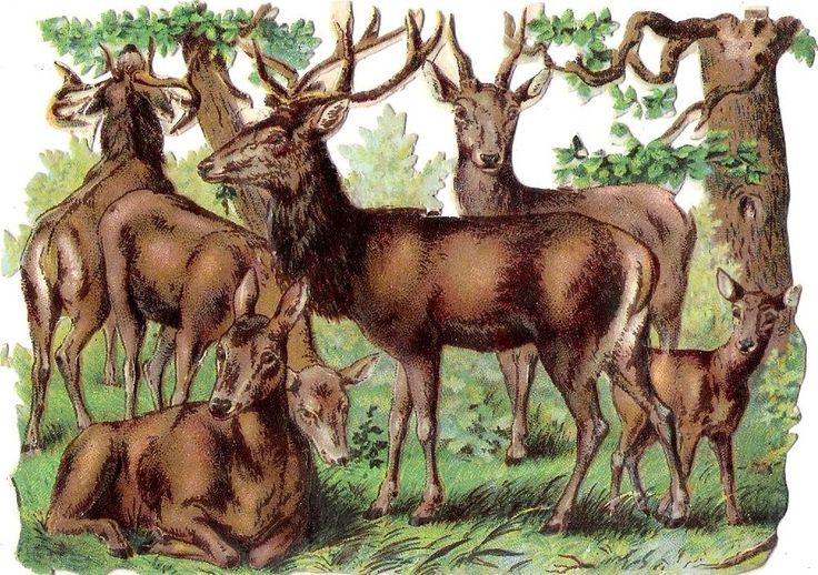 Oblaten Glanzbild scrap die cut chromo Reh deer wild Hirsch Kitz Wald wood: