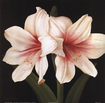 Contemporary Lily I