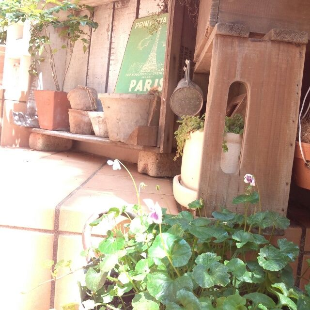 玄関ガーデン/ガーデニング/雑貨/玄関/入り口のインテリア実例 - 2013-08-07 13:58:38   RoomClip(ルームクリップ)
