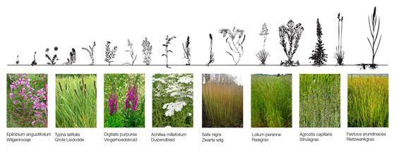 Purifying Park de Ceuvel | Amsterdam Netherlands | Delva Landscape Architects