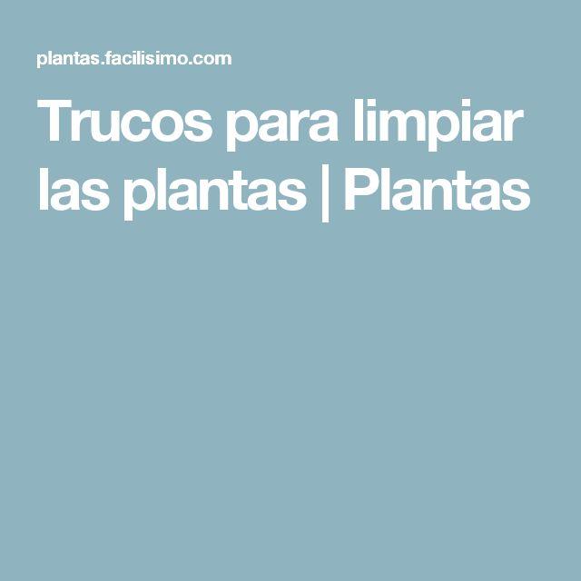 Trucos para limpiar las plantas | Plantas